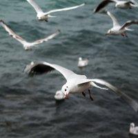 Чёрное море :: Ардалион Иволгин