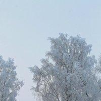 Январское морозное :: Михаил Лобов (drakonmick)