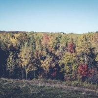 осень2015 :: Володя Корнеюк