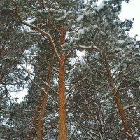 Как прекрасен лес зимой! :: Марина Иванова