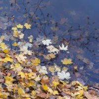 Осенний эпизод :: Светлана