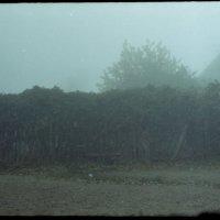 Туман :: Сурикат Сусликов