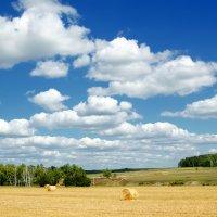 По дороге с облаками :: Ольга Савотина