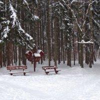 в зимнем лесном парке :: Валентина. .