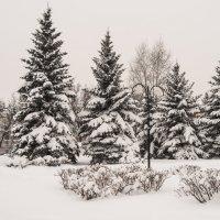 Цветное фото серых будней ... :: Андрей Зайцев