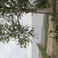 На озере Ильмень :: Алина Шевелева