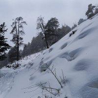 Лес в предгории :: Zifa Dimitrieva