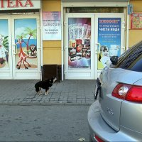 Выходи!.. Пожалуйста!!! :: Нина Корешкова