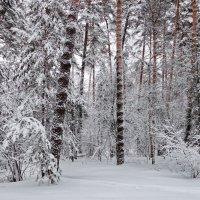 С утра метель и снегопад... :: Лесо-Вед (Баранов)