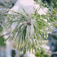 зима краса :: олеся