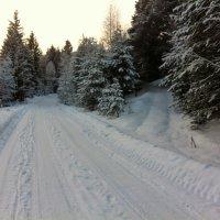 две дороги...два пути... :: helga 2015