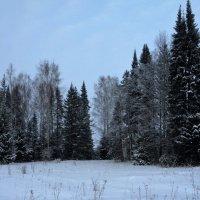 в снежной тишине... :: helga 2015