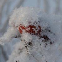 Укутанный снегом :: Екатерина