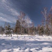 просто зима... :: Наталья Маркова