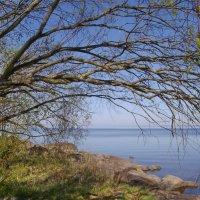 Склонилась ивушка над озером :: lady v.ekaterina