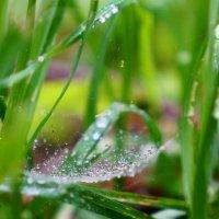 Дождь в гамаке :: НикЛеод