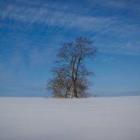 липа в поле :: Седа Ковтун