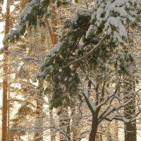 Мороз и солнце :: Олег Пучков