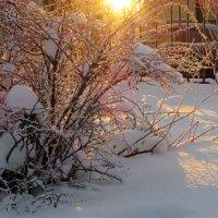 Мороз и солнце!... :: Ирина Румянцева
