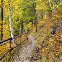 Осенние краски :: Николай Танаев