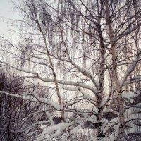 Зима в берёзовых объятьях :: Николай Туркин