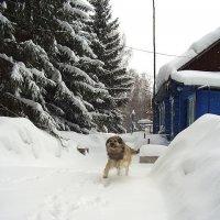 Зима :: Нина