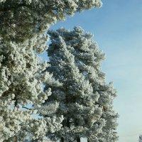 Зима. :: Александр