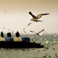 Чайки :: Елена Селина