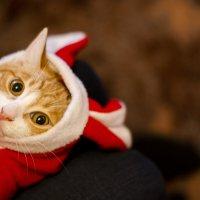 когда уже кончится этот новый год?! :: Инна