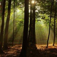 Солнышко в лесу :: Alexander