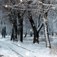 Зимний сон. :: Валентина ツ ღ✿ღ