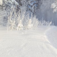 Зимняя сказка. :: Алексей. Бордовский