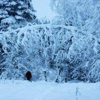 Снег :: Наталья