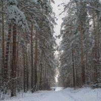 Зимний лес :: Александр Шамов