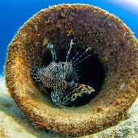 lionfish :: Светлана Янюшкина