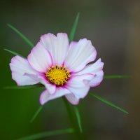 Портреты цветов :: Игорь Герман