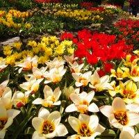Серия Весна :: Валерий Струк