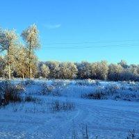 Зимний лес. :: Дарья Гречина