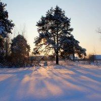 Морозное зимнее утро :: Катя Бокова