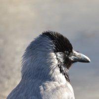 Птичка 2 :: ded vlad