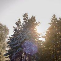 Мороз и солнышко :: Кирилл Богомазов