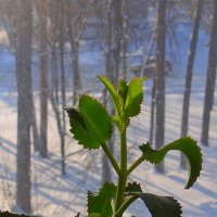А за окном -зима ... :: Юрий Владимирович 34