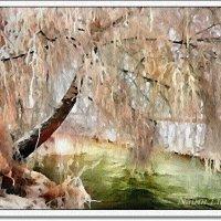 Береза зимой :: Лидия (naum.lidiya)