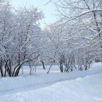 Инеем укрыты деревья :: Лидия (naum.lidiya)