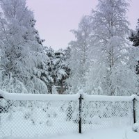 Снег..снег... :: Галина Полина