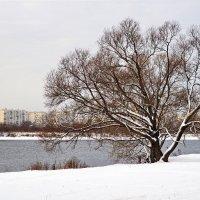 Зимняя зарисовка. :: Юрий Шувалов