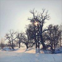 Зимний пейзаж №3 :: Алексей Макшаков