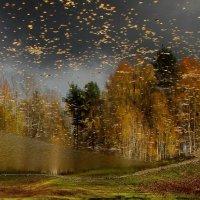 Золотых червонцев листопад. :: mike95