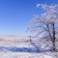 зимний день :: татьяна