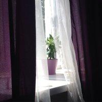 Любимое неприхотливое домашнее :: Евгения Латунская